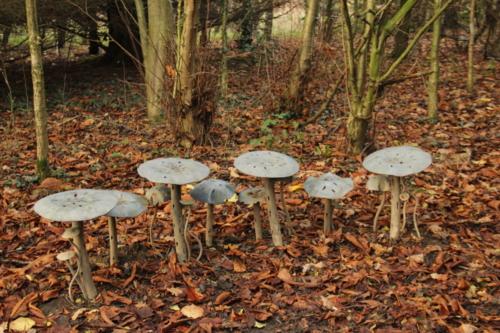 mushrooms in steel